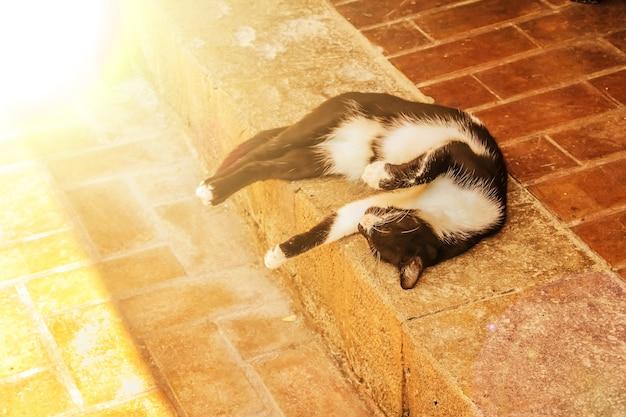Белый и черный кот отдыхает в тени
