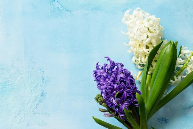 白と青のヒヤシンス花の青いコンクリートの背景春の花の背景上面図