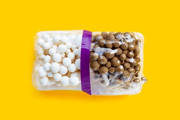 白と茶色のブナキノコ