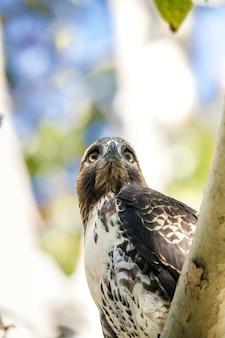 낮 동안 나뭇 가지에 흰색과 갈색 새