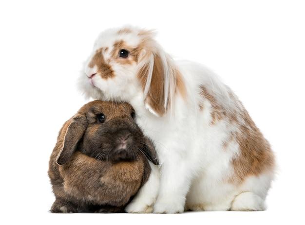 Белые и коричневые кролики бок о бок, изолированные на белом фоне