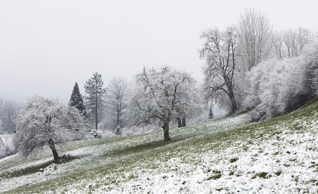 낮 동안 흰색과 갈색 나무