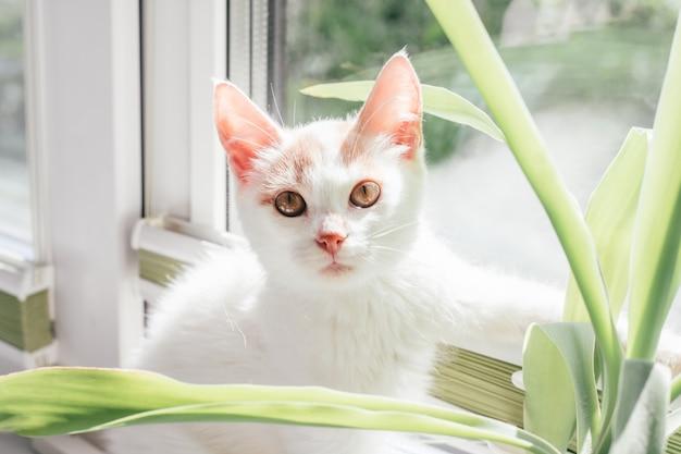 흰색과 생강 고양이 3-4개월은 창가에 앉습니다. 태양 광선에 고양이, 관엽 식물 옆