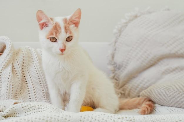 흰색과 생강 고양이 3-4개월은 가벼운 담요에 앉습니다. 발이 있는 새끼 고양이, 노란색 붕대로 붕대