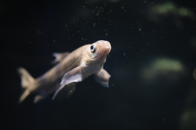 白と灰色の魚