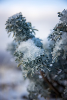 白と緑の植物をクローズアップ