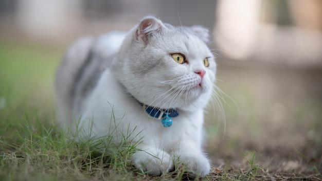 芝生の上に座っている白と灰色の猫