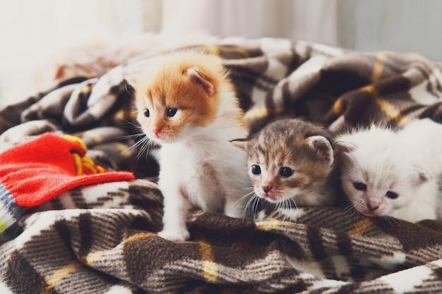 格子縞の毛布で白とオレンジ色の生まれたばかりの子猫