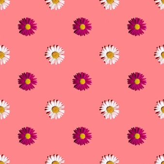 濃い影のピンクの背景に白とピンクのデイジー