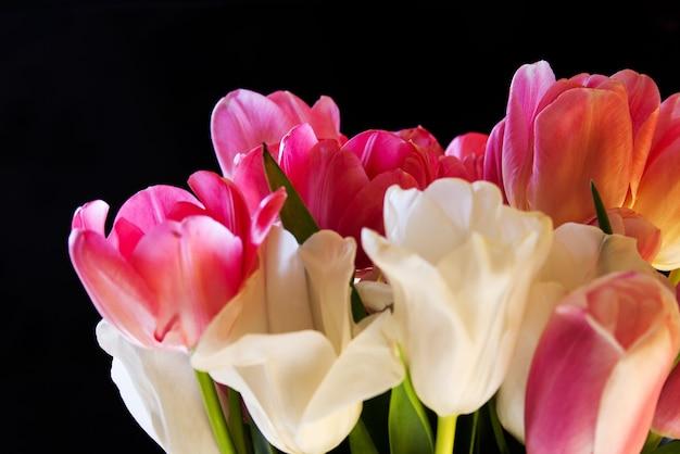 검정색 배경에 꽃다발 클로즈업에 흰색과 분홍색 섬세한 튤립