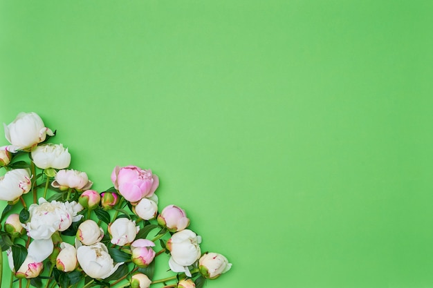 Белые и розовые пионы на зеленом фоне. копировать пространство, вид сверху