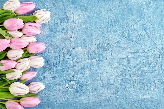 파란색 배경에 흰색과 분홍색 튤립 테두리입니다. 공간, 평면도를 복사합니다. 생일, 어머니의 날