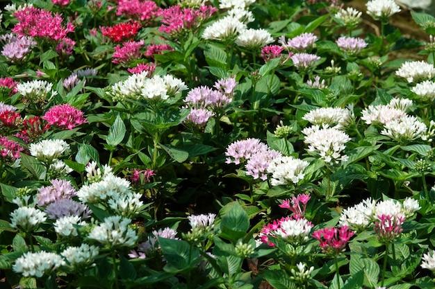 Белые и фиолетовые цветы в саду