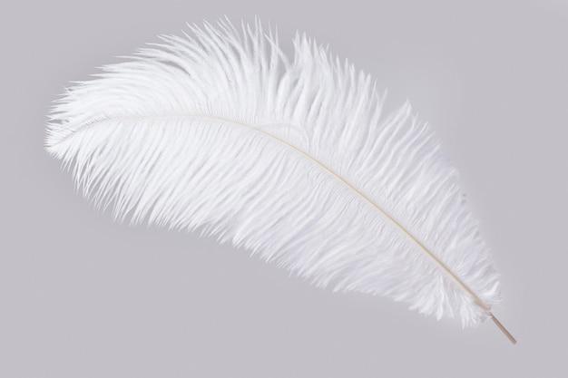 Белое и мягкое страусиное перо, изолированное на серой поверхности
