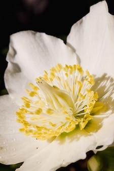 白と黄色の花をクローズアップ
