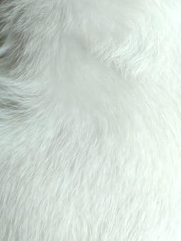 白い動物の髪の質感