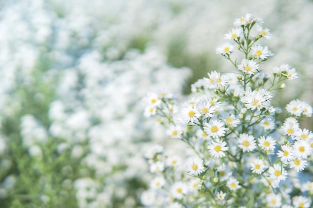 배경 흐리게와 흰색과 꽃 꽃