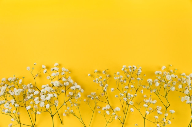 White baby breath's flower on yellow background