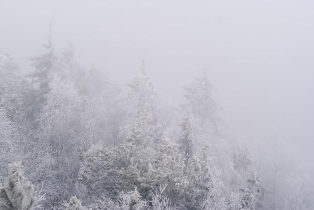 Белый фон, пейзаж - заснеженные вершины деревьев, едва заметные в морозной дымке.