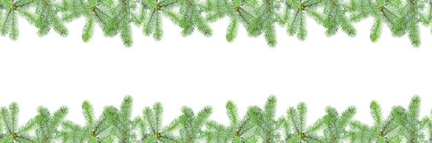 モミの枝のフレームと白い背景