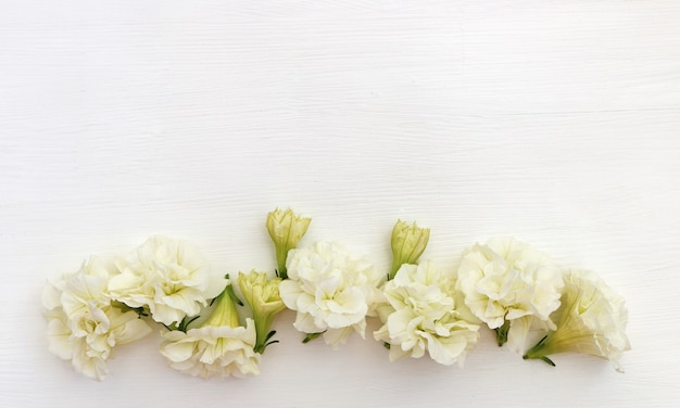 White background with flowers