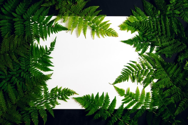 White background with a frame of fern leaves.
