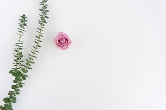 White background with green plant and pink flower