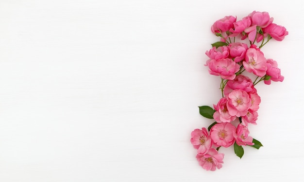White background with pink roses
