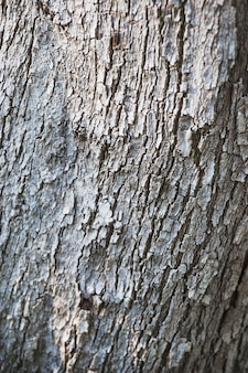 White bark of tree