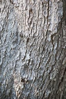 White bark of tree