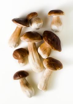 白地に白の美しい大きなポルチーニ茸