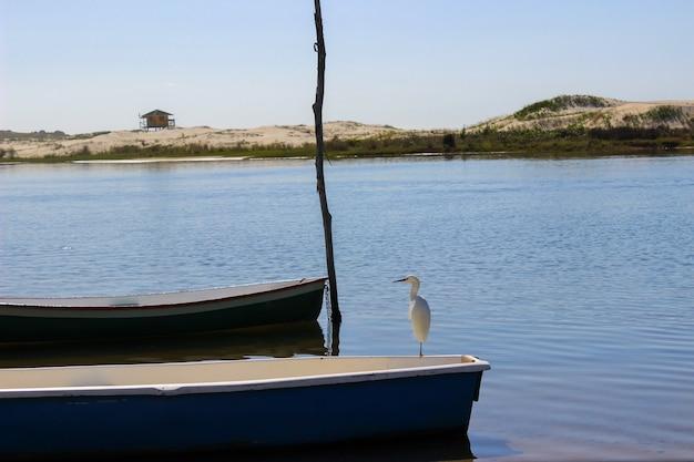 브라질 해변에서 푸른 강 위에 파란 보트에 흰색 아름 다운 새. guarda do embau, santa catarina.