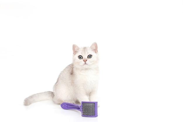 Белый красивый котенок британской породы сидит на белом, рядом с фиолетовым гребнем для шерсти.