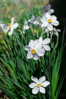 White beauty flowers spring vertical photo
