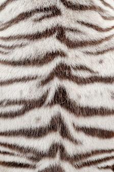 White bengal tiger fur