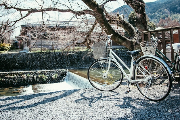 White bicycle park under sakura tree near river at arashiyama, kyoto japan.