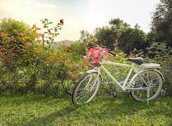 緑の庭に美しい花が咲いた白い自転車は朝に太陽があります