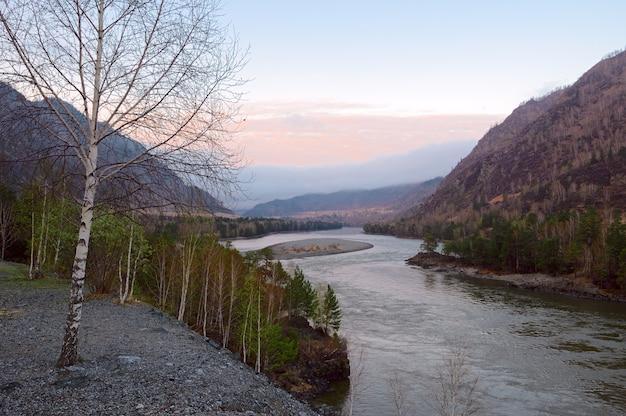 Белая береза весной на крутом берегу реки в горах алтая