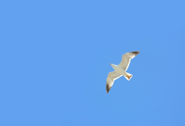 White bird are flying in the sky.