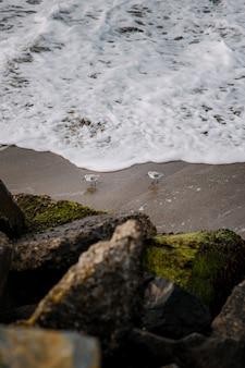 Uccello bianco sulla sabbia marrone vicino al corpo idrico durante il giorno