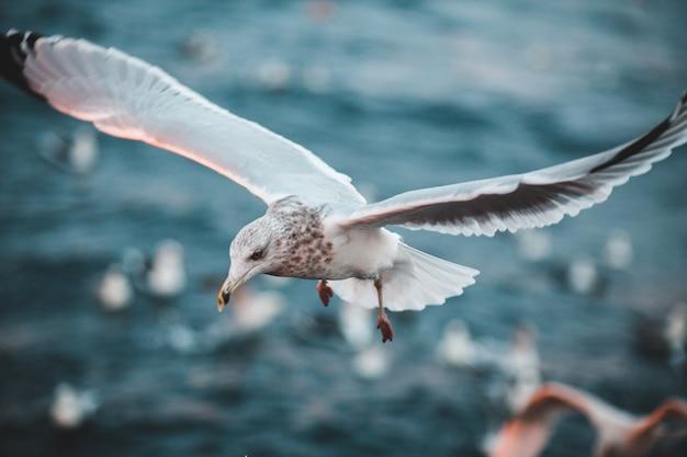 Белая птица в дневное время