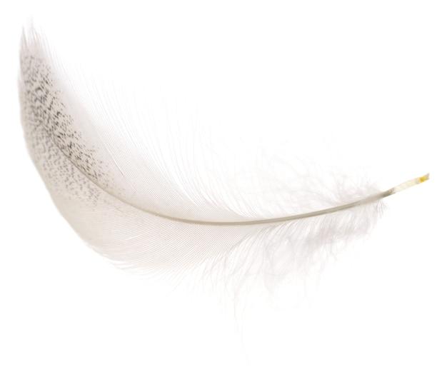 Белое перо птицы изолированное на белой предпосылке.