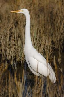 昼間に茶色の草の上を飛んでいる白い鳥