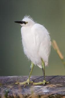 茶色の木の棒に白い鳥