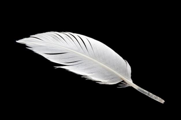 검은 배경에 고립 된 흰 새 날개 깃털