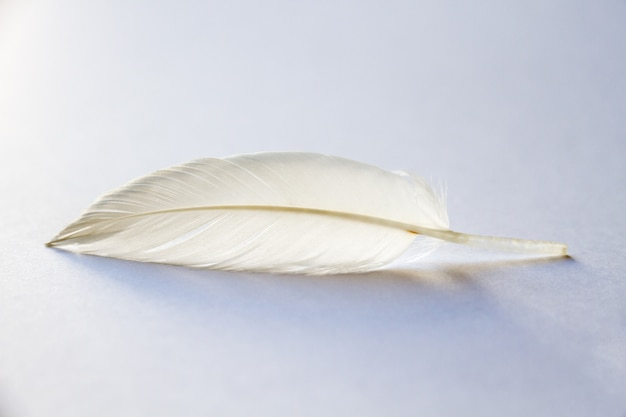 밝은 배경에 흰색 새 날개 깃털