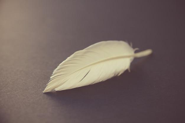 어두운 우아한 배경에 쉬고 흰 새 날개 깃털