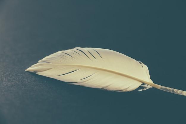 어두운 우아한 배경에 쉬고 있는 흰 새 날개 깃털