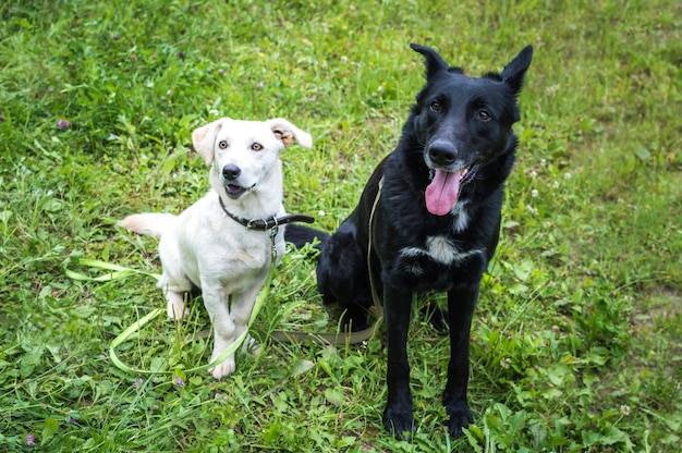 White and black dogs on the grass in the park