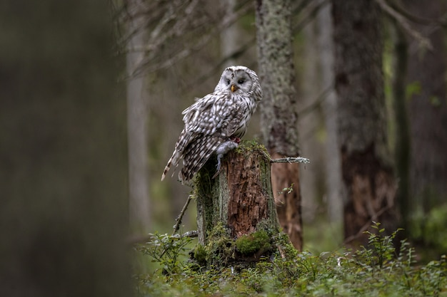 White and black owl on tree branch